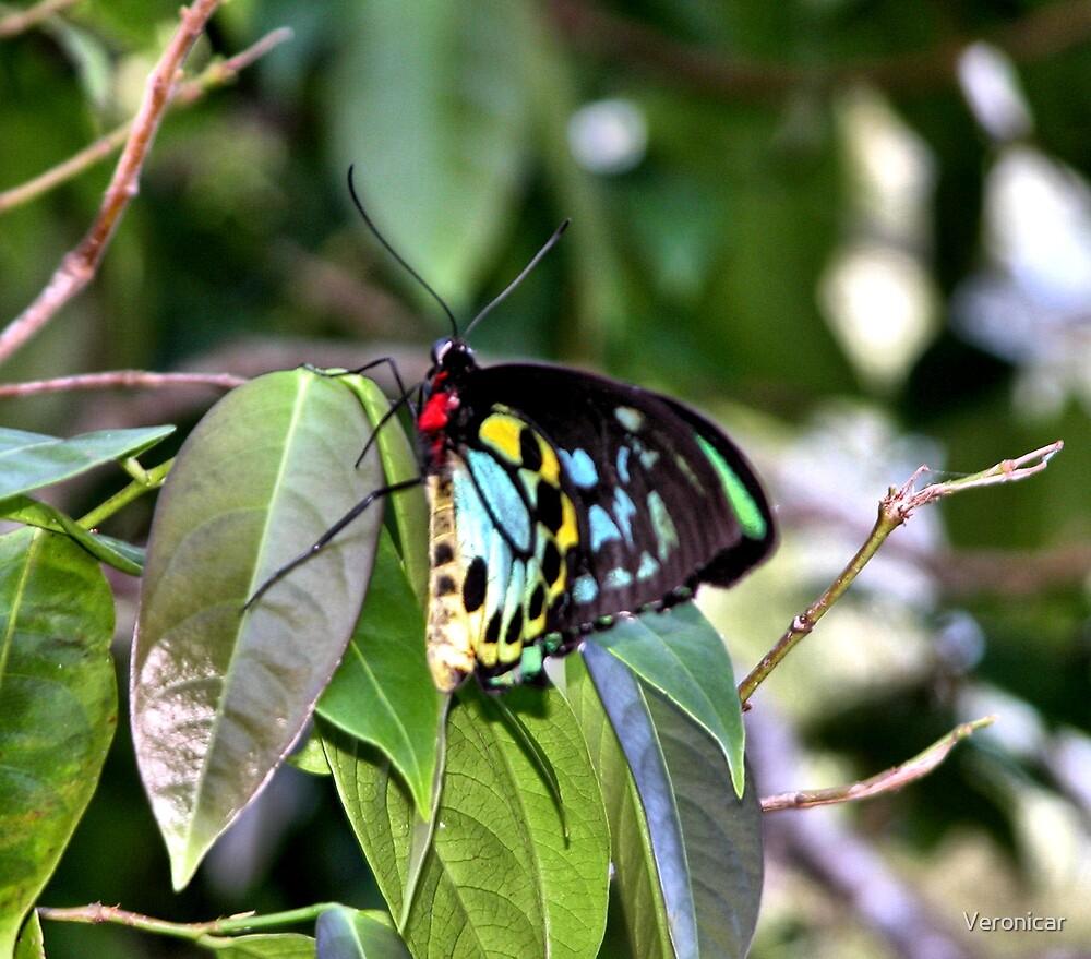 Butterflies by Veronicar