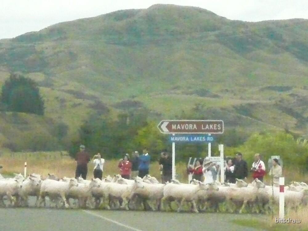 Sheep Parade by bitsdraw