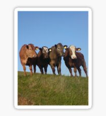And the Cows in the Meadow go 'Moo!' Sticker