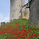Tulips @ Arundel Castle, West Sussex by Chris Monks