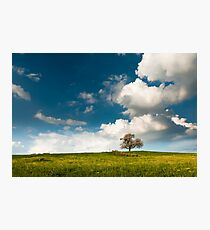 single tree in spring Photographic Print