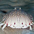 Crab Happy Face by natalies
