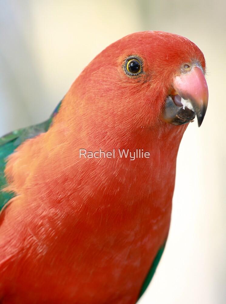 Parrot by Rachel Wyllie