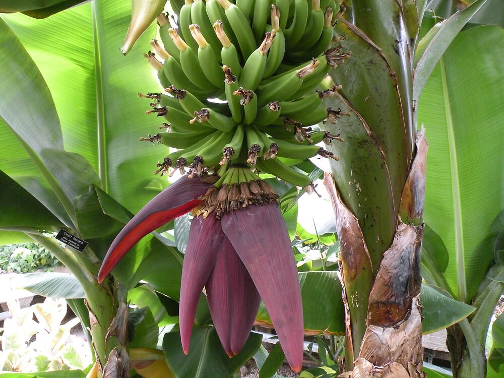 Banana Heart by shooterrn
