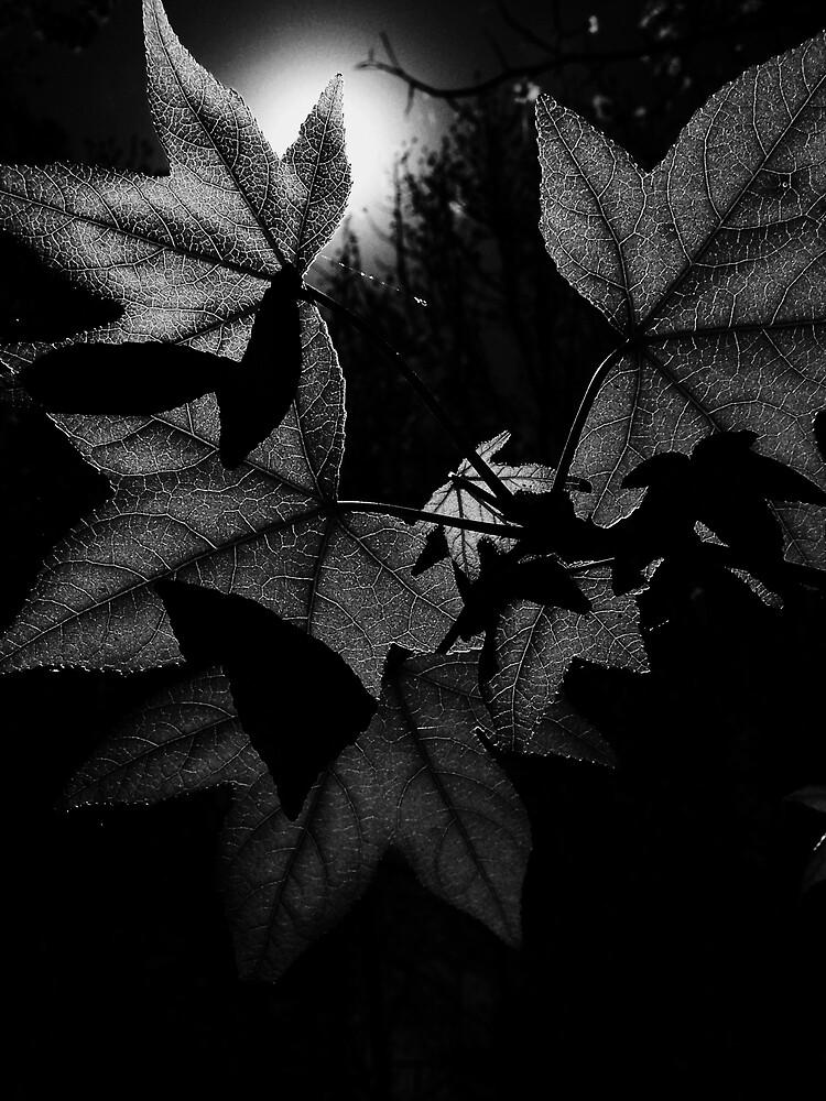 Leaves by Lyndsey  Kelley