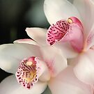 Orchid by jackitec