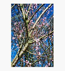 Blossoming Tree Photographic Print