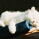 Sweet dreams by Bente Agerup
