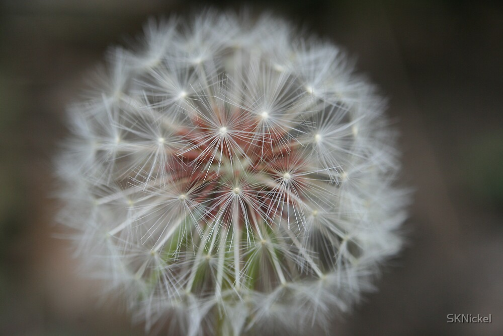 Make a Wish by SKNickel