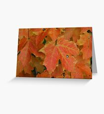 Maples! Greeting Card