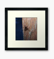 Insect With Wings Framed Print