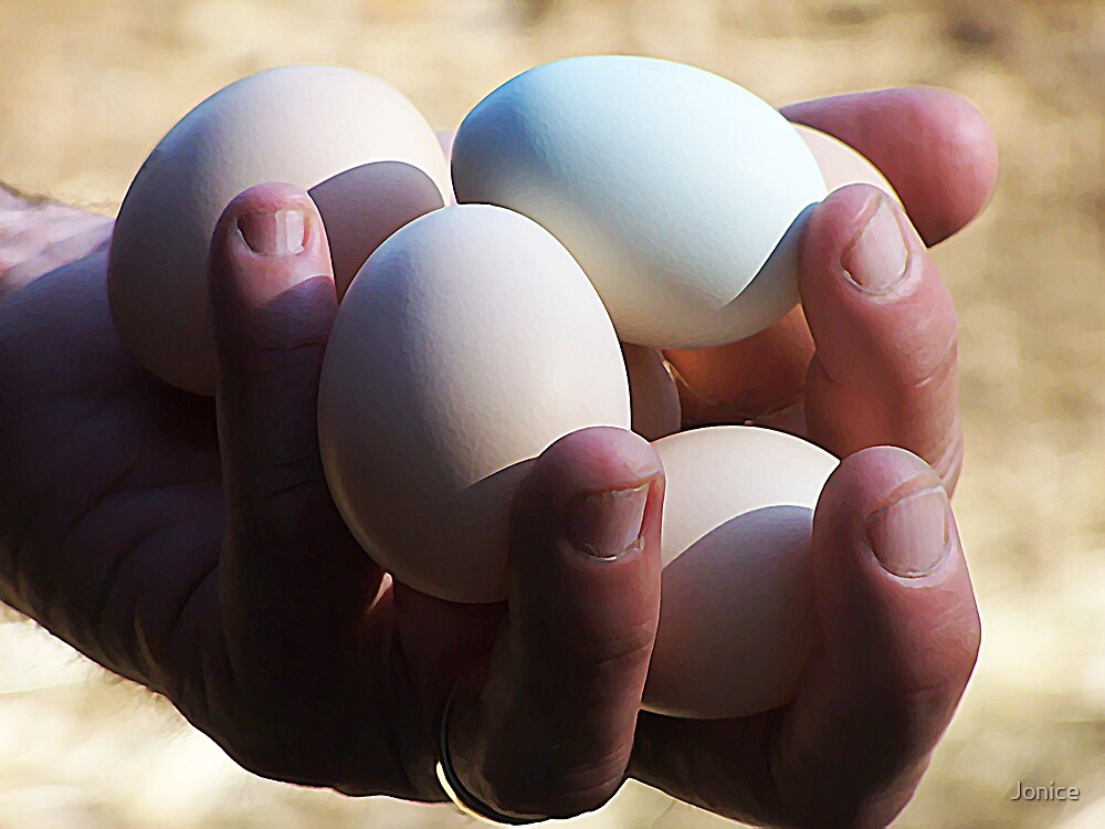 Handful Of Chicken Eggs by Jonice