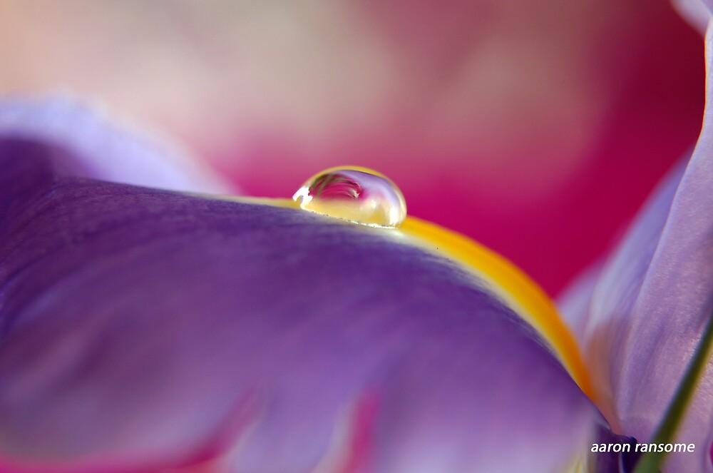 Iris Petal Bubble 2 by badaz123