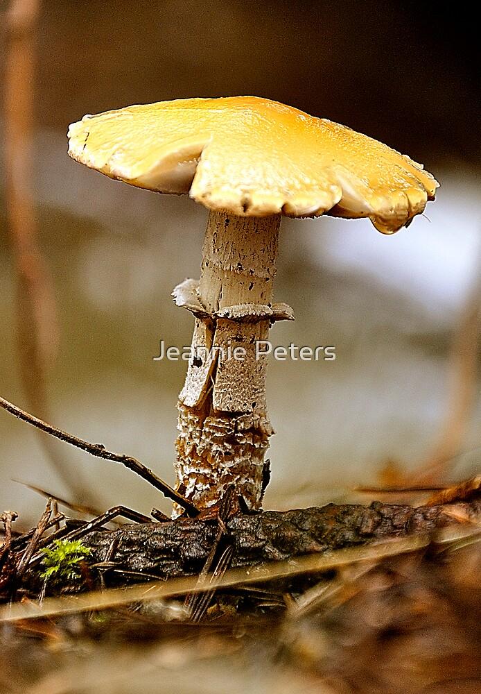 mushroom by Jeannie Peters
