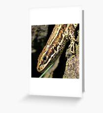 Viviparous Lizard Greeting Card