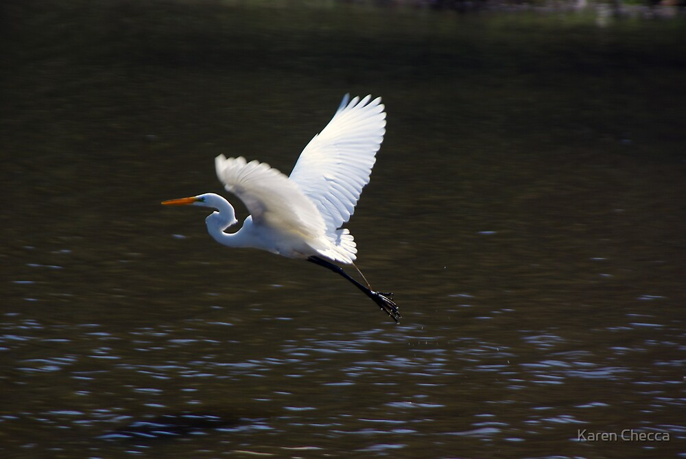 Egret On the Move by Karen Checca