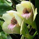 Little Orchids by ienemien