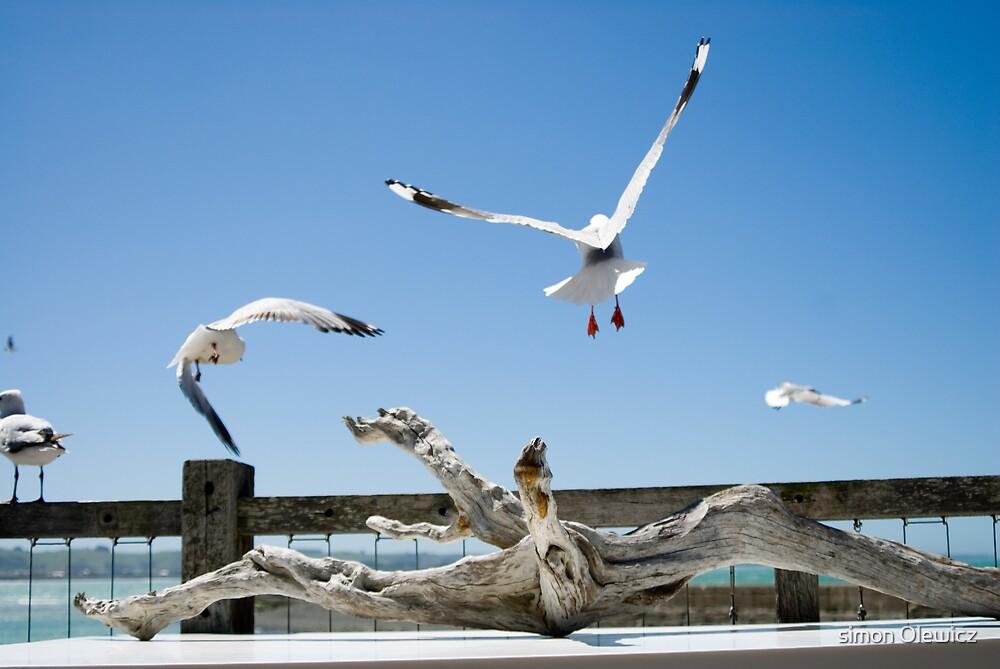 Take flight by Simon Olewicz