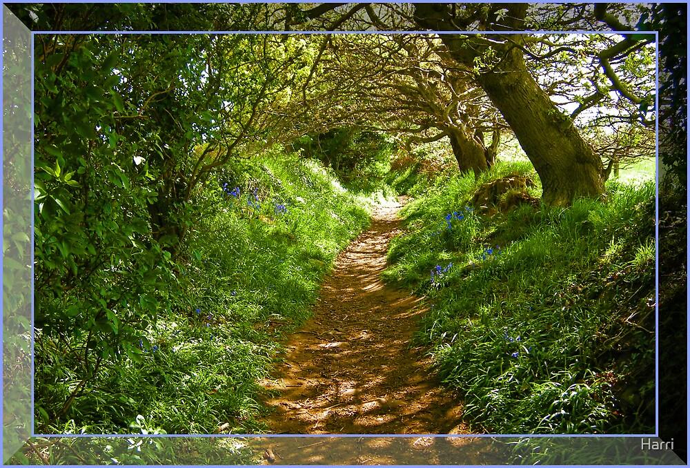 Bluebell trail by Harri
