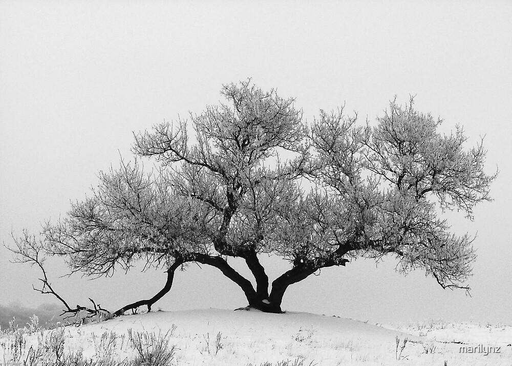 winter tree by marilynz
