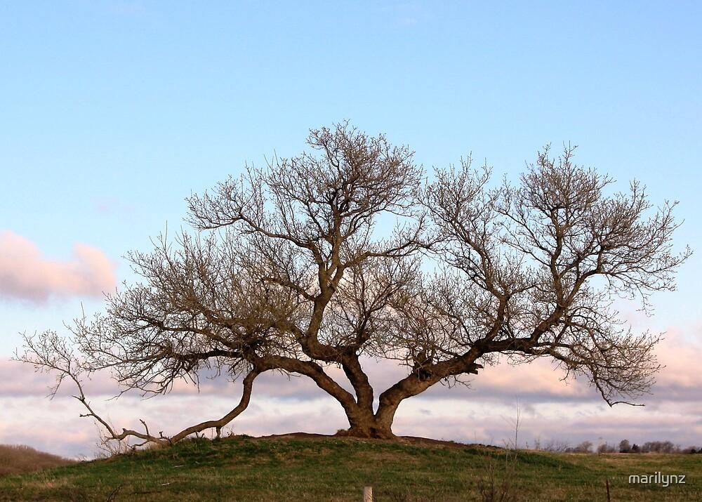 Spring Tree by marilynz