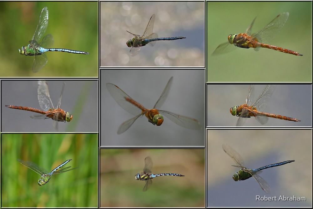 Dragonflies In Flight by Robert Abraham