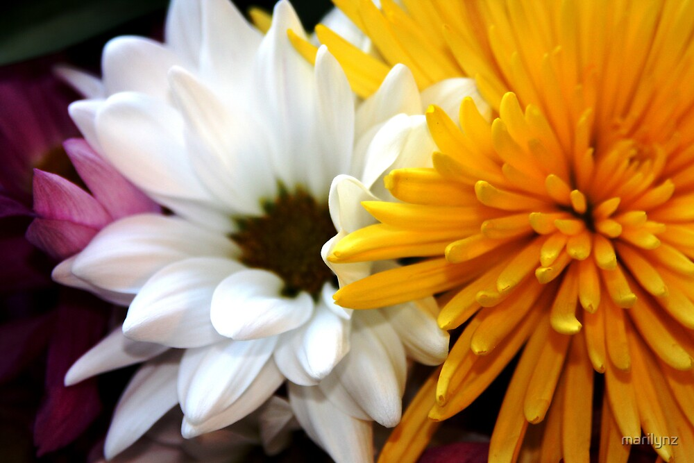 nestling florals by marilynz