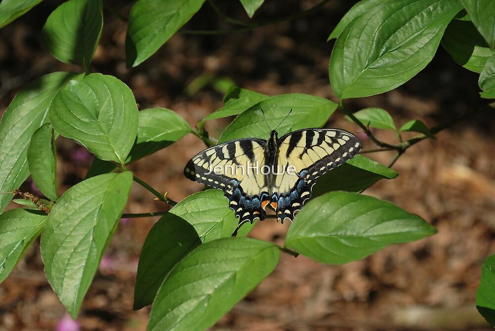 Butterfly by JennHowe