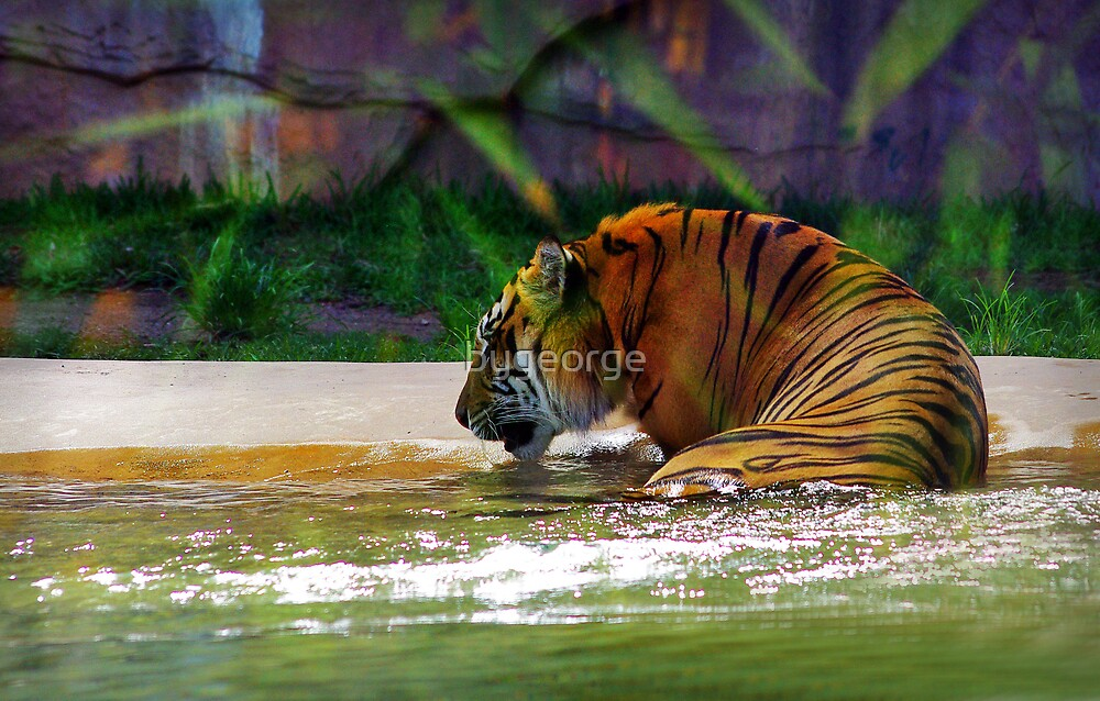 """""""It's my birthday and all I get is water"""" by bygeorge"""