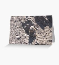 Fat Groundhog Greeting Card