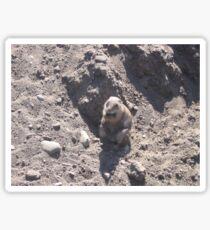 Fat Groundhog Sticker
