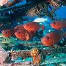 Bigeye snappers under a beam by natalies