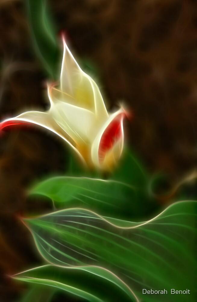 Two Tone Tulip by Deborah  Benoit