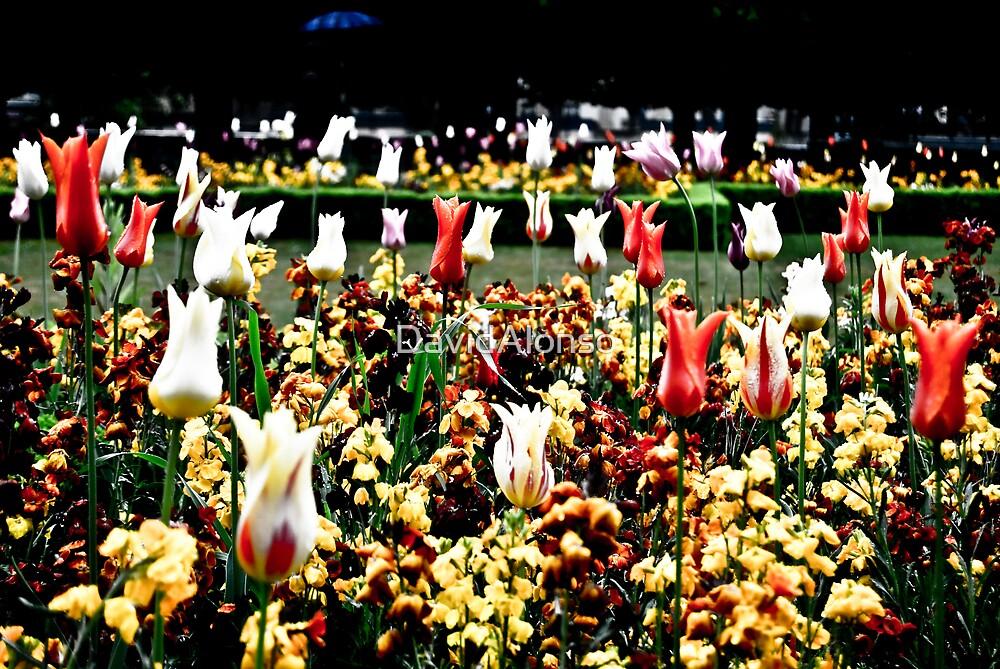 Notre Dame Garden by DavidAlonso