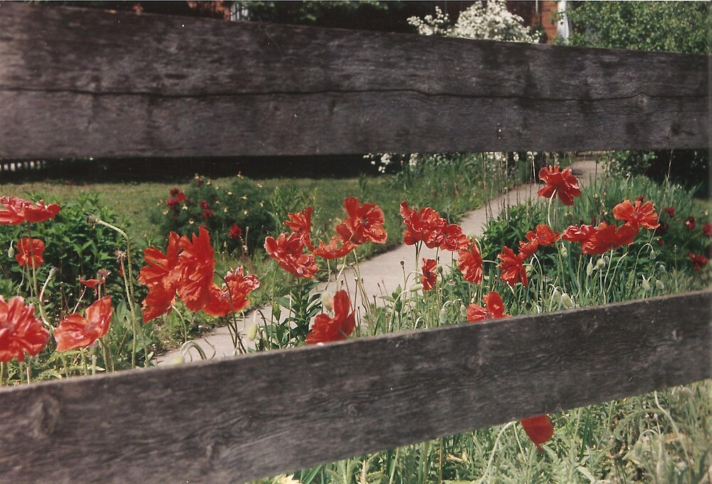 Amana Poppies by rebuhman