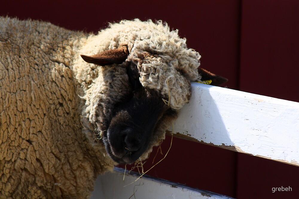 Lamb by grebeh