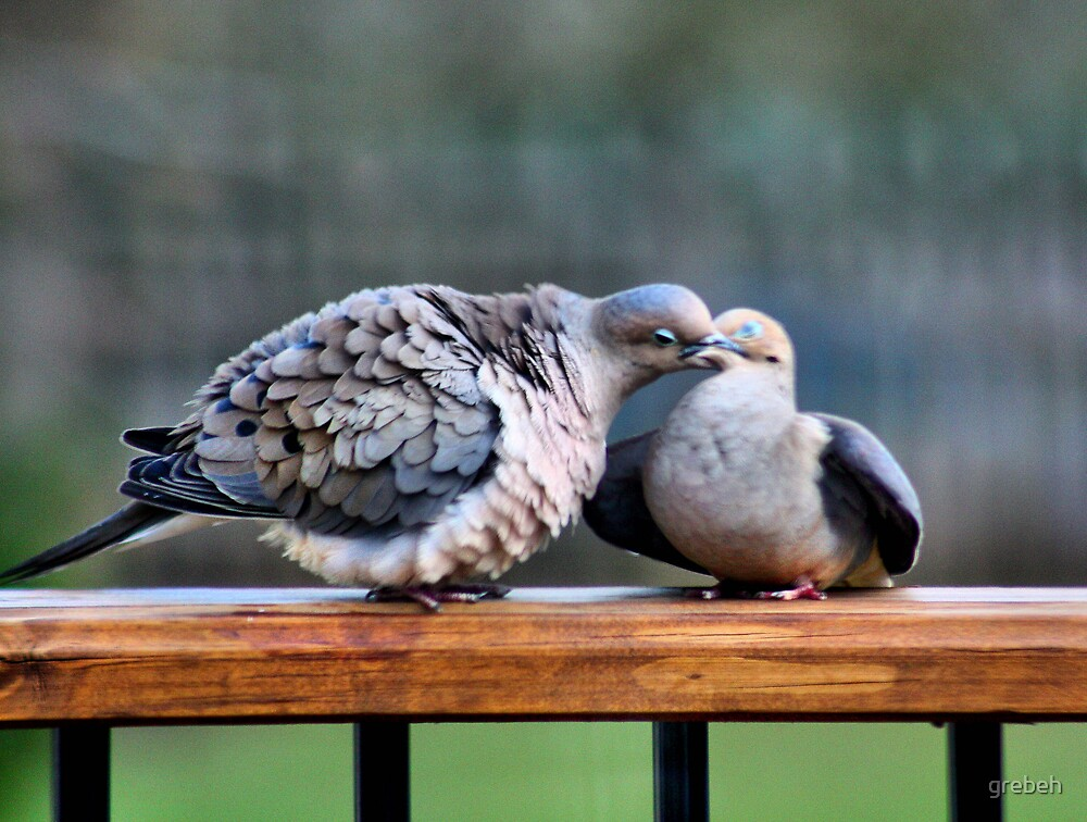 Doves by grebeh