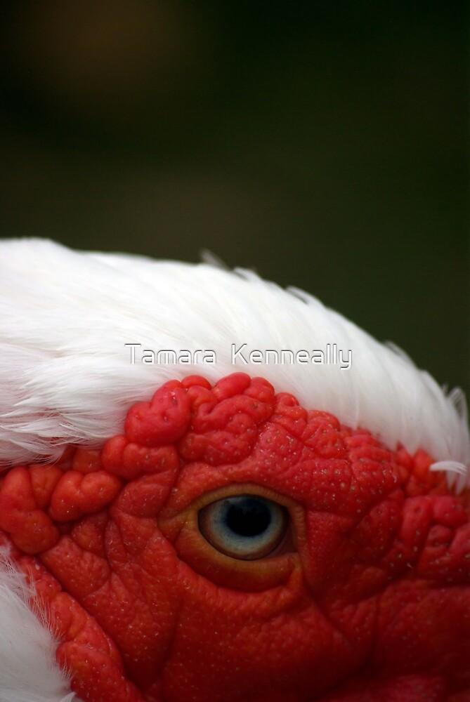 Eye by Tamara  Kenneally