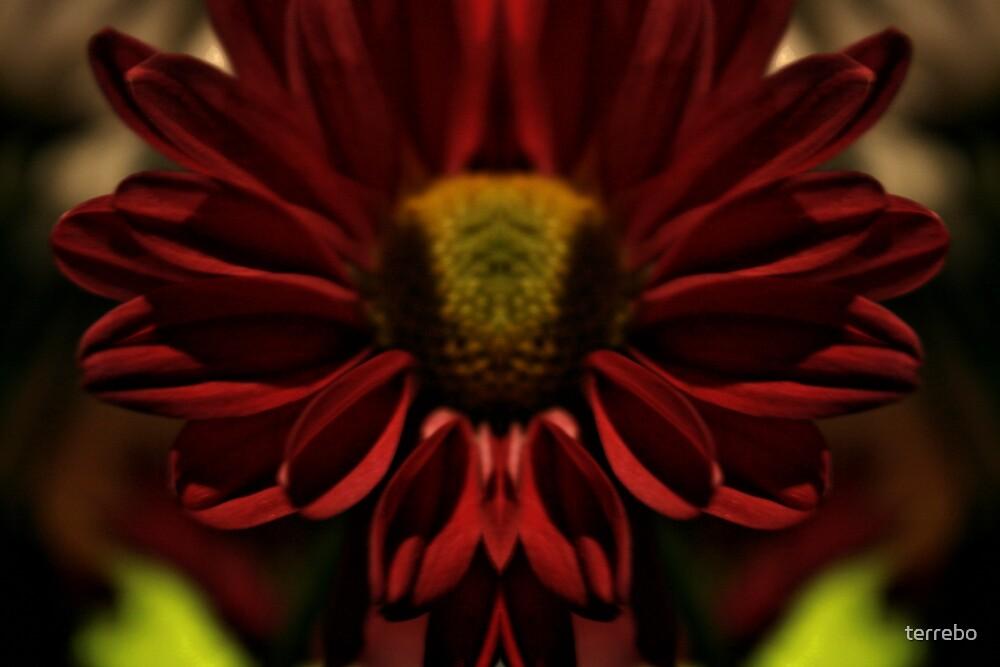 RedFlower in Light Reflections by terrebo