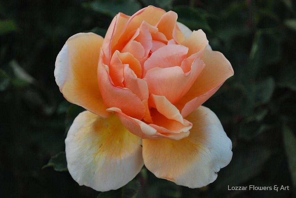 Orange dream by Lozzar Flowers & Art