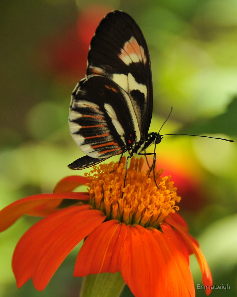Drilling for Nectar by EmmaLeigh