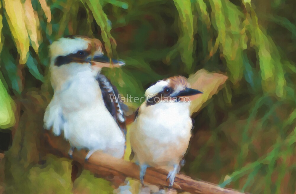 Two Kookaburras on a branch by Walter Colaiaco