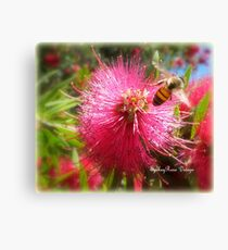 Bee and Red Bottle Brush Canvas Print