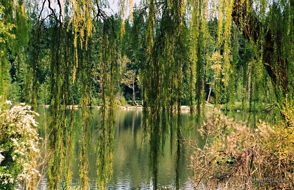 Willow Weep for Me by RobertCharles