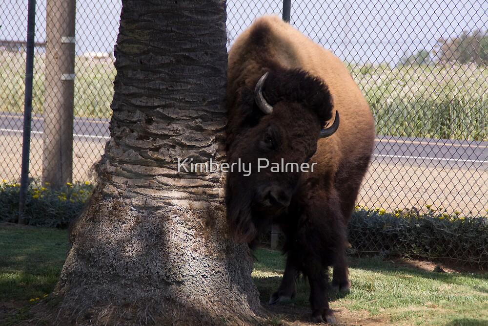 Pet Buffalo, named Cheyenne by Kimberly Palmer