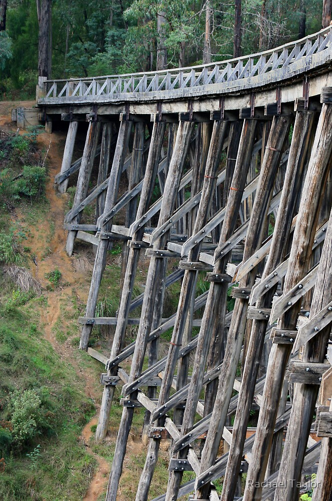Noojee Trestle by Rachael Taylor