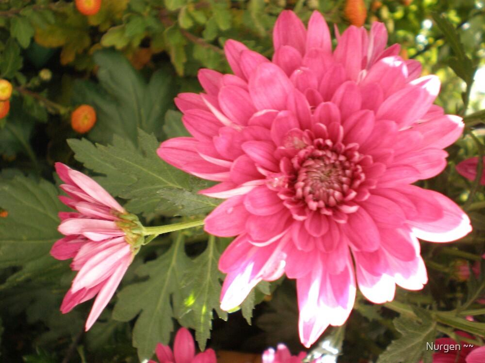 eyes of the flower by Nurgen ~~