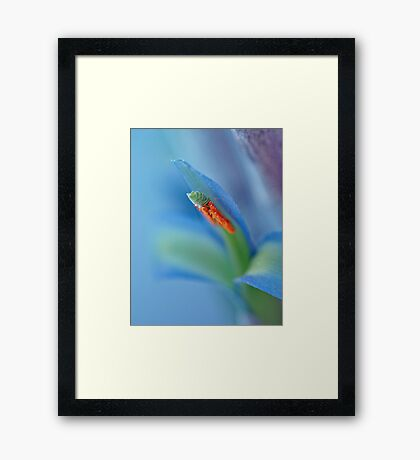 Blue Framed Print