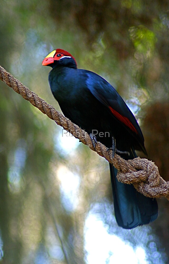 Violet Turaco by Ruby  Pen