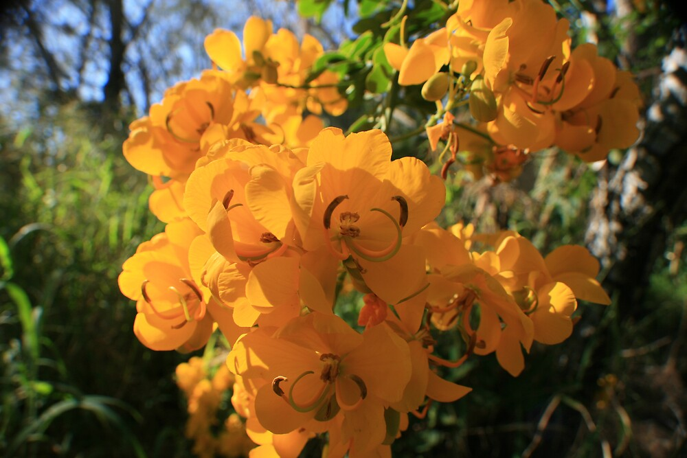 Yellow flower  by faulsey